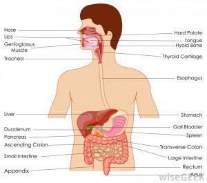 βουτανικό οξύ ή βουτυρικό οξύ